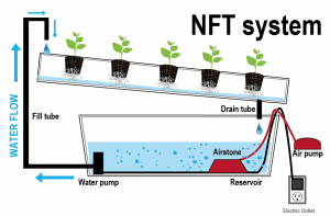 nft-nutrient-film-technique-system-explained